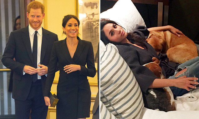 Meghan Markle Reveals Hers and Harry's Dog's Name! image