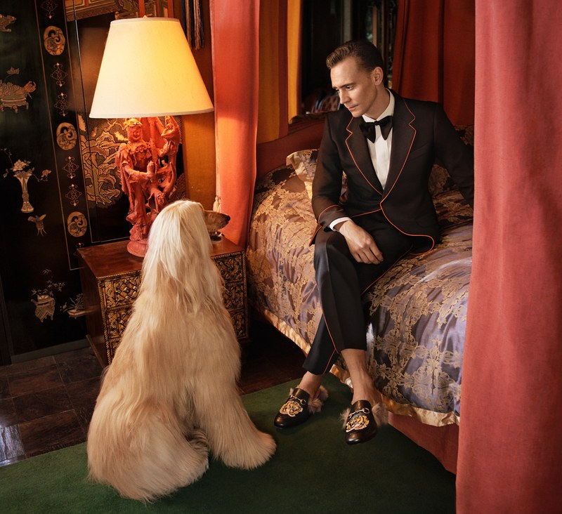 Tom Hiddleston in New Gucci Campaign ft. Two Afghan Hounds